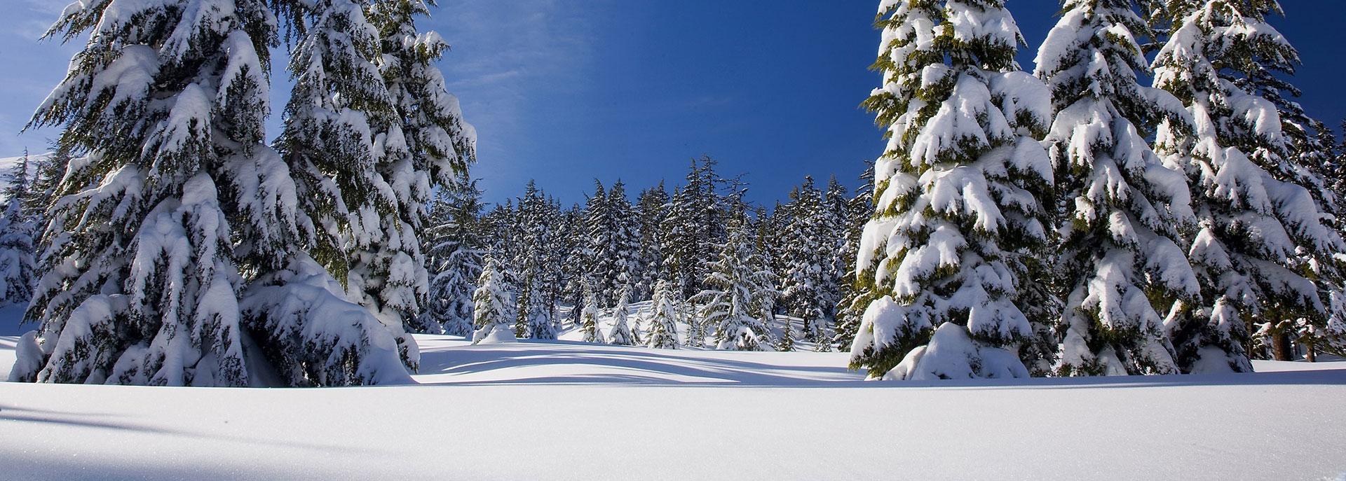 Wald mit Schnee Pfelders/Passeiertal