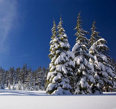 Bäume mit Schnee Pfelders/Passeiertal